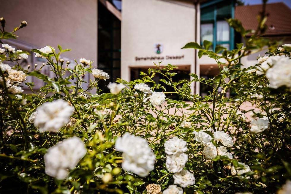 Sneak Peak zivile Hochzeit & Elopment in Dielsdorf & Regensberg, Hochzeitsfotograf Zürich, projectphoto.ch