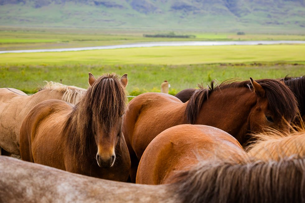 Riding Tours South Iceland - projectphoto.ch